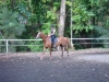 Adults-cours-cheval-4