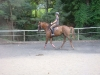 Adults-cours-cheval-6